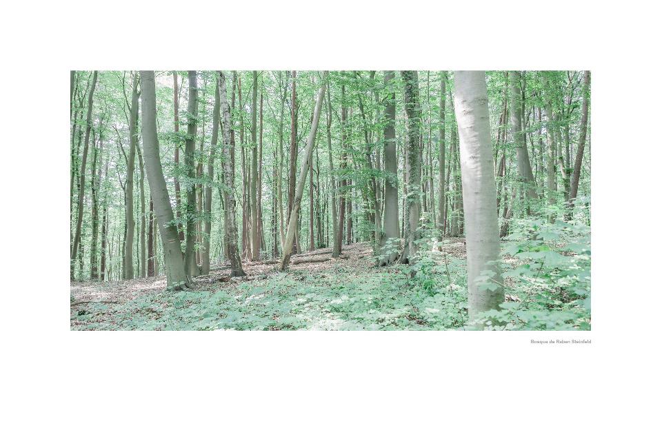 Bosque de Raben Steinfeld